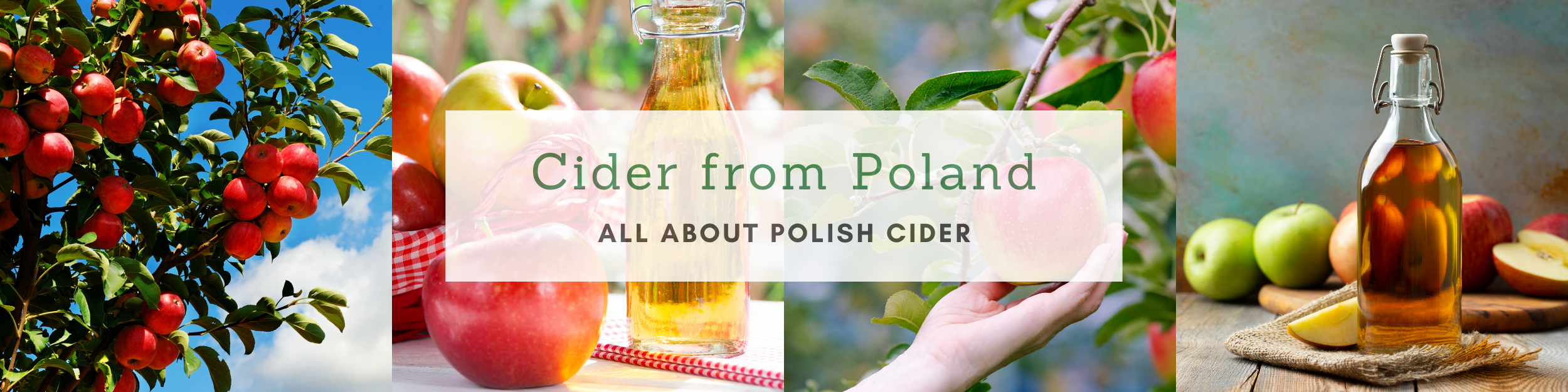 Cider from Poland